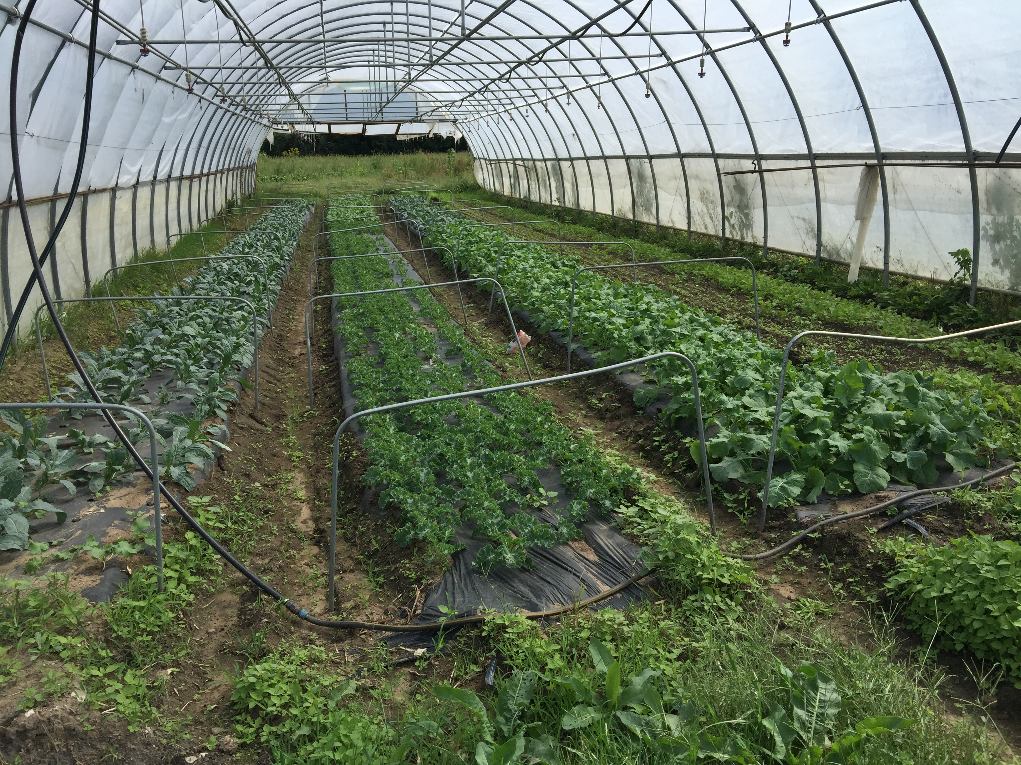 Organic Farming in Western New York